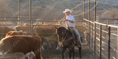 películas de ranchero f110d1e1f9a